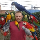 African Gray Parrots And Macaw Parrots For Sale